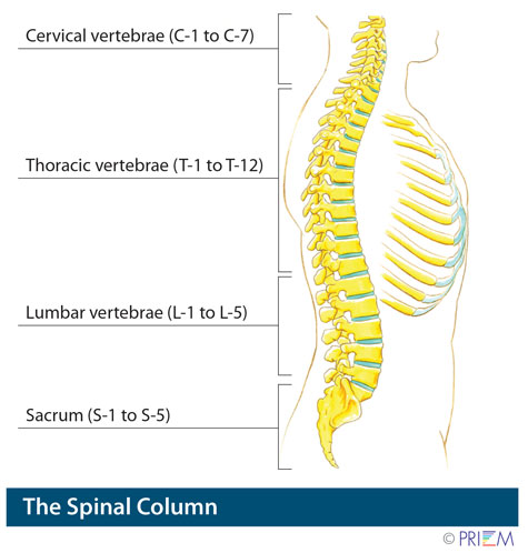Anatomy library for back pain and neck pain - SpineNevada Minimally ...